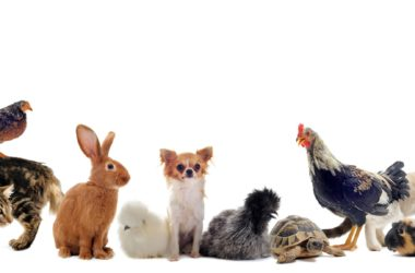 Pet Rabbit Insurance Comparison to Veterinary Bills